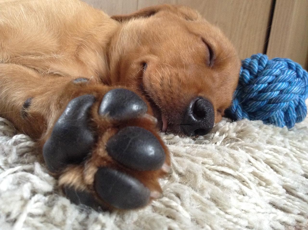 Contest dog photos Kennel Club Dog Photographer 2016_08