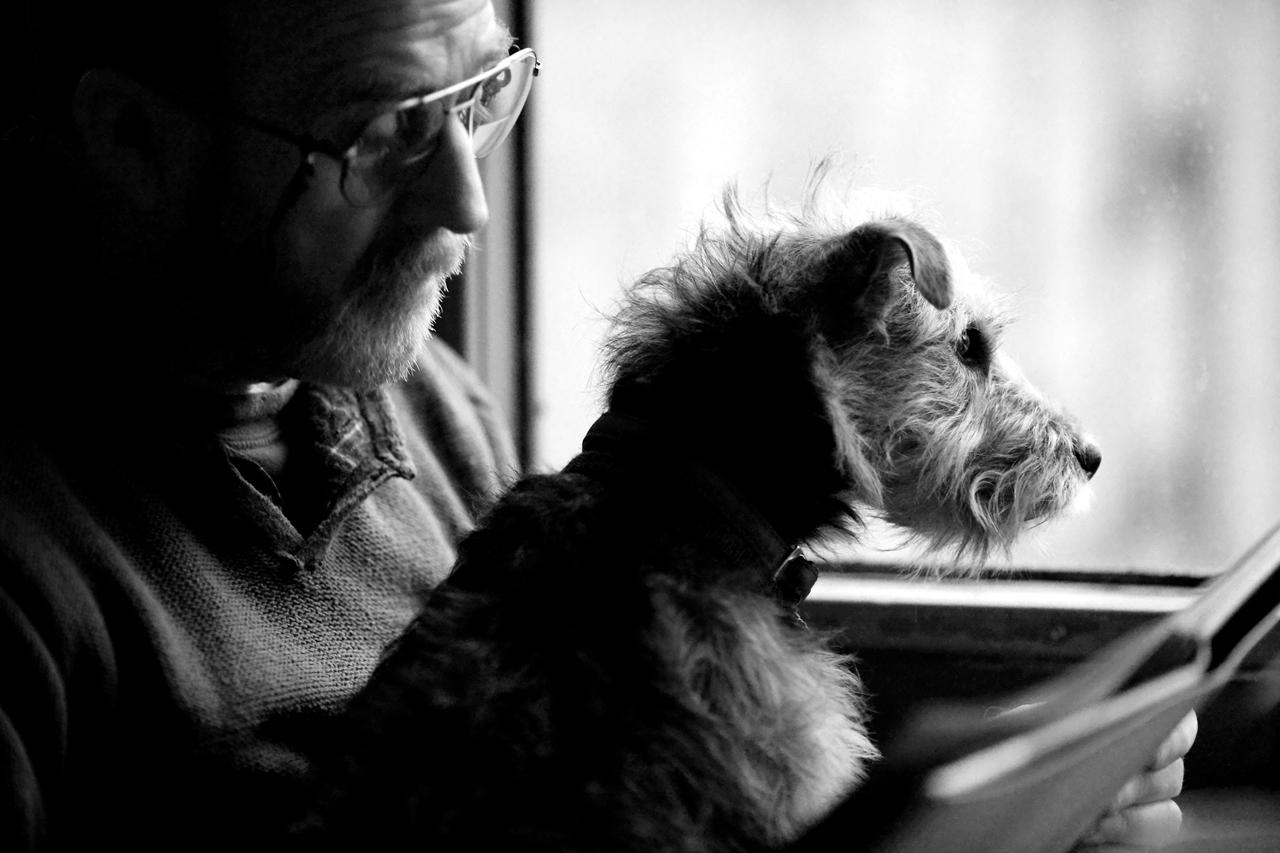 Contest dog photos Kennel Club Dog Photographer 2016_09