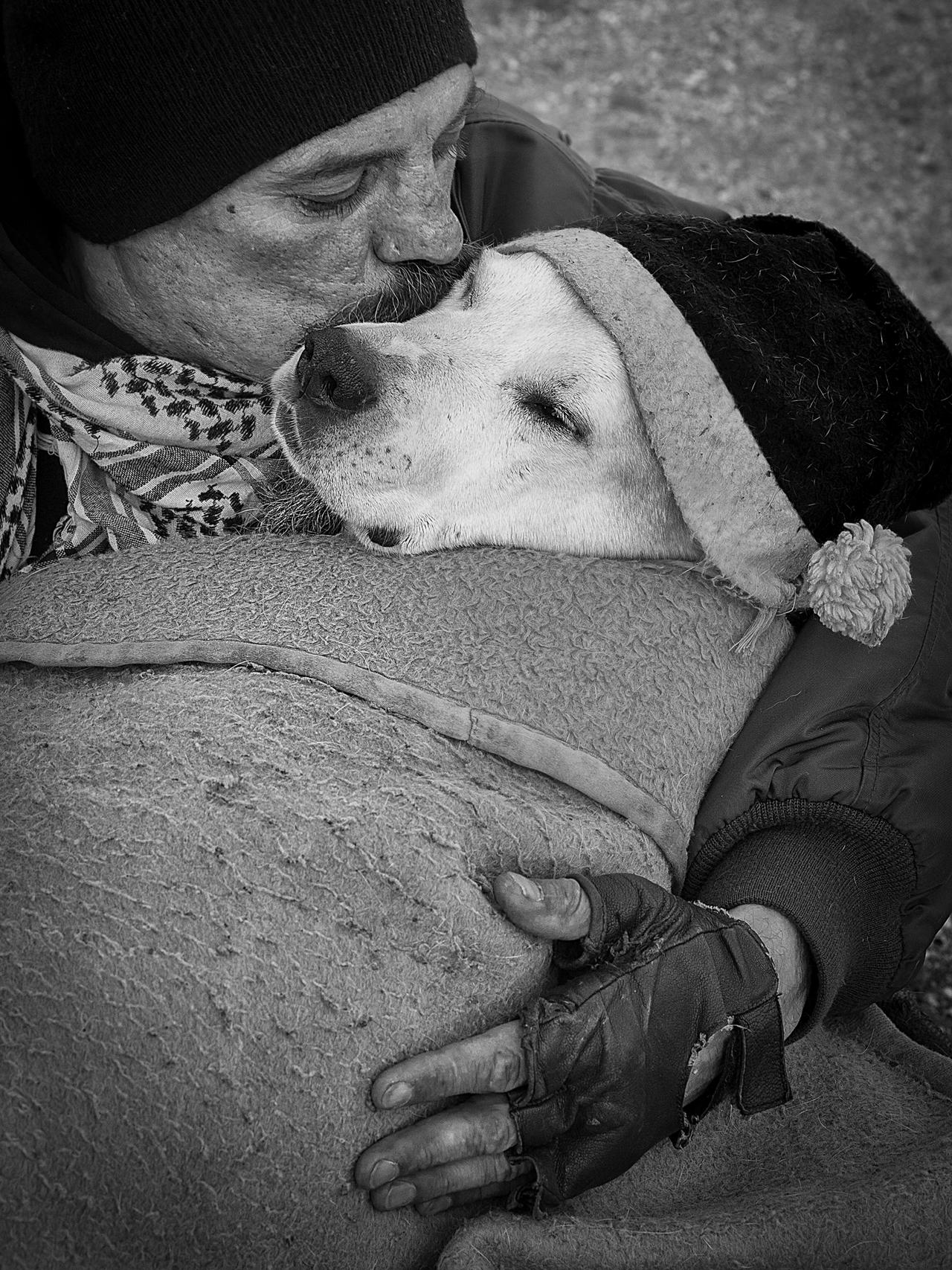 Contest dog photos Kennel Club Dog Photographer 2016_11