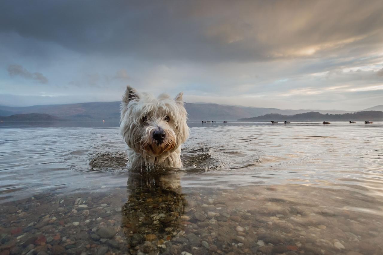 Contest dog photos Kennel Club Dog Photographer 2016_13