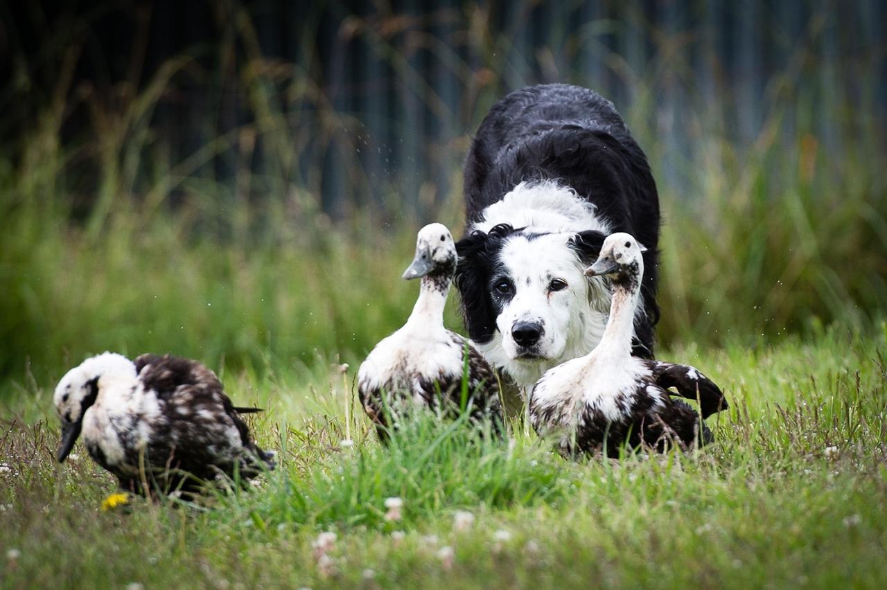 Contest dog photos Kennel Club Dog Photographer 2016_14