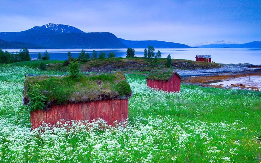 Fabulous beauty Scandinavian homes with green roofs 14