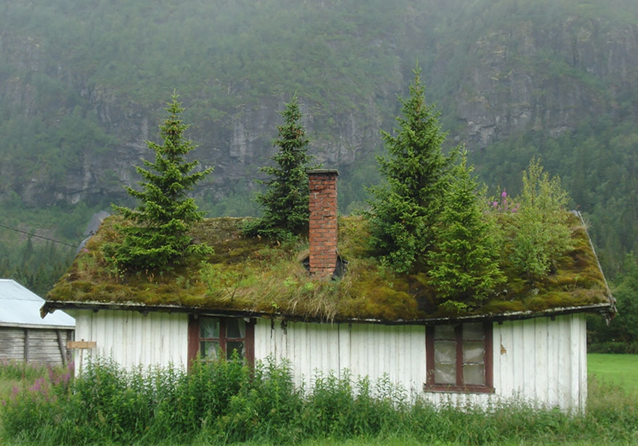Fabulous beauty Scandinavian homes with green roofs 24