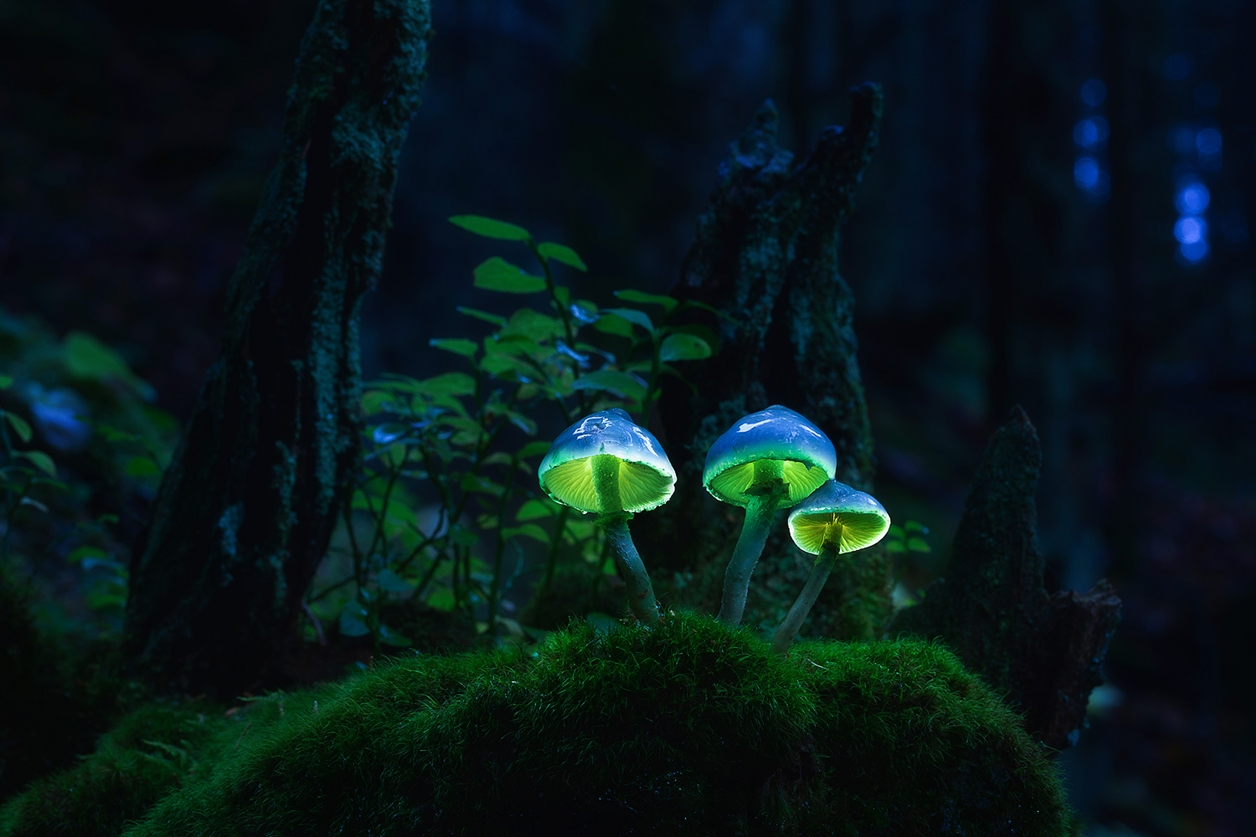 Glowing mushrooms 01