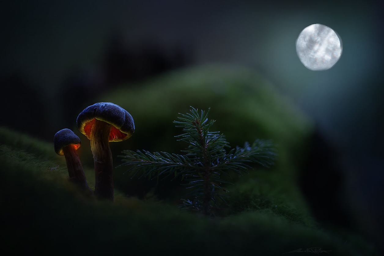 Glowing mushrooms 02