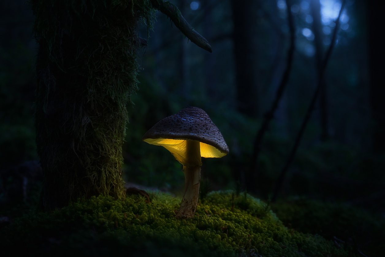 Glowing mushrooms 05