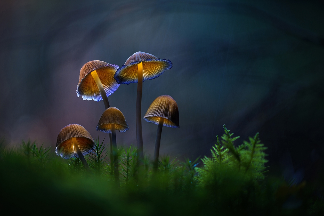 Glowing mushrooms 08