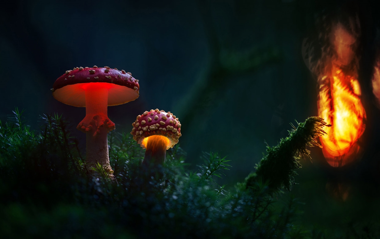 Glowing mushrooms 10