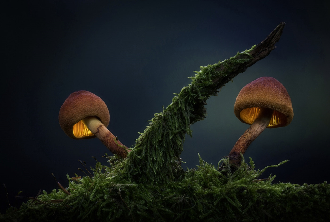 Glowing mushrooms 12