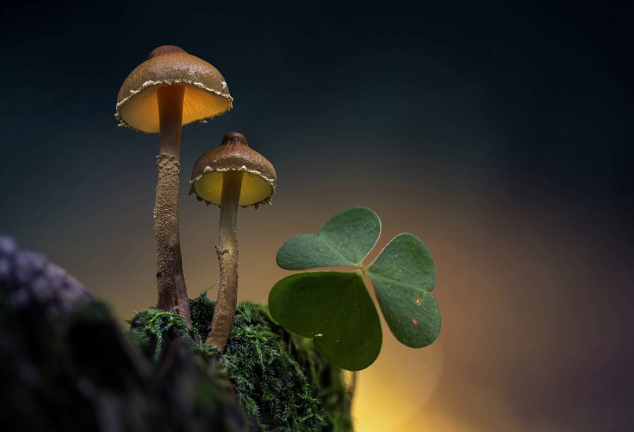 Glowing mushrooms 13