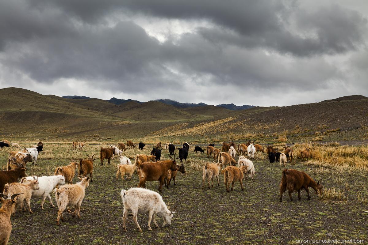 Harsh Mongolia 10