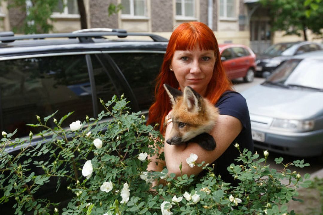 In St. Petersburg the girl bought the Fox from fur farms in order to save his life 03