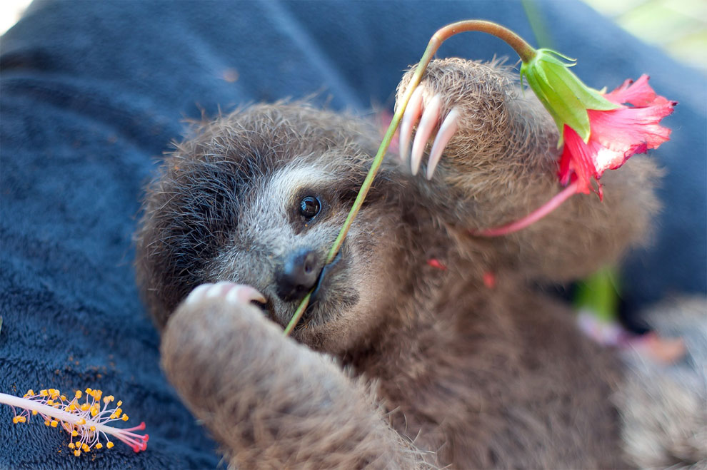 Institute helping sloths in Costa Rica 11
