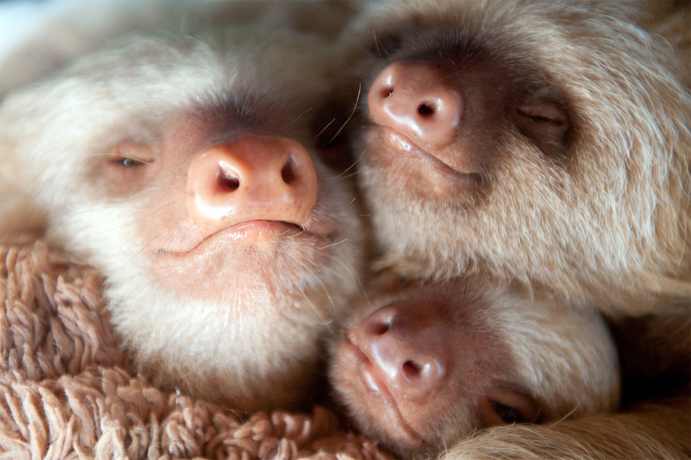 Institute helping sloths in Costa Rica 13