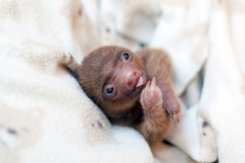 Institute helping sloths in Costa Rica 16
