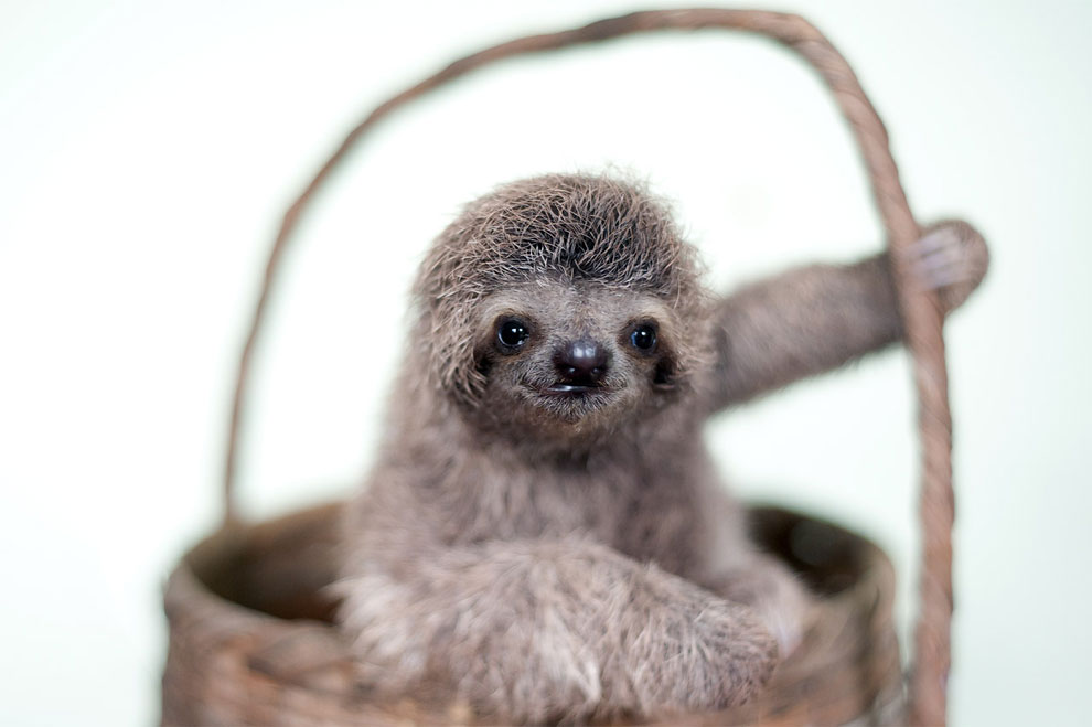 Institute helping sloths in Costa Rica 17
