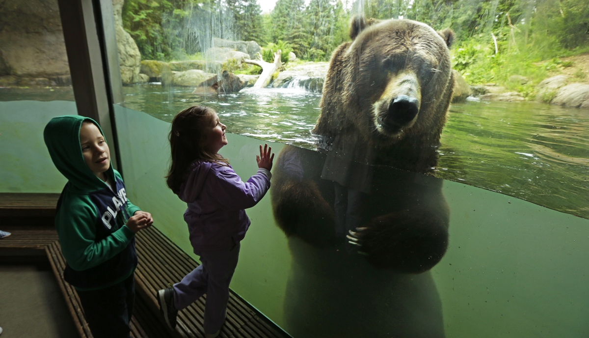 Interesting pictures with animals 29