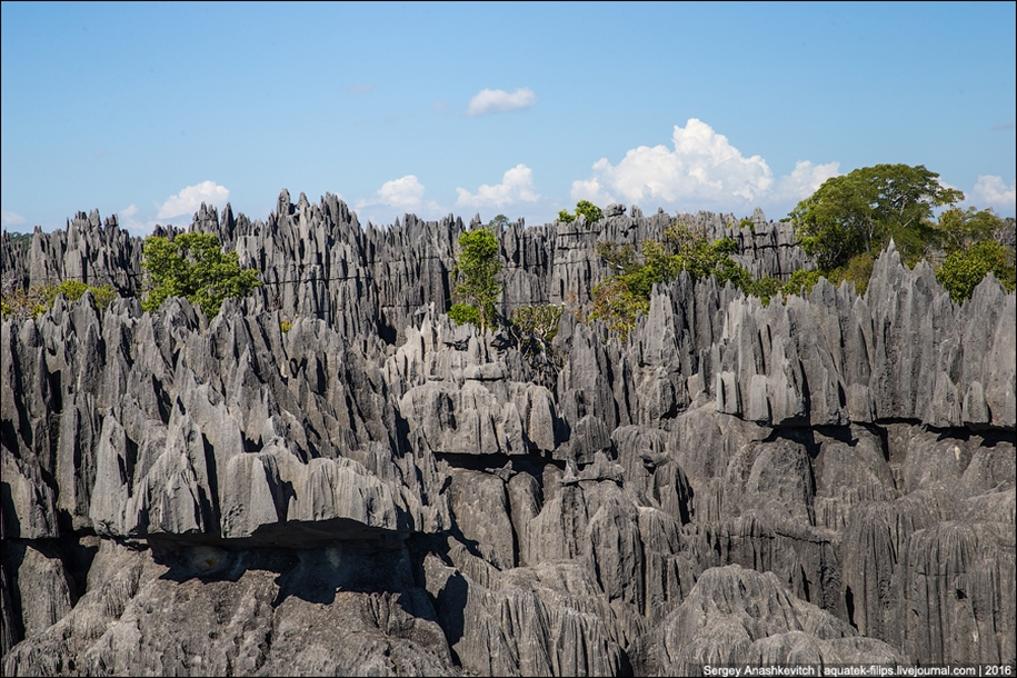 It's worth seeing with your own eyes! Stone forest of Tsingy 10