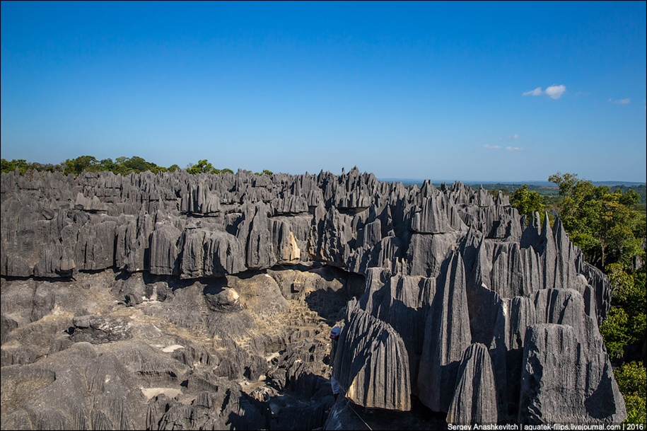 It's worth seeing with your own eyes! Stone forest of Tsingy 16
