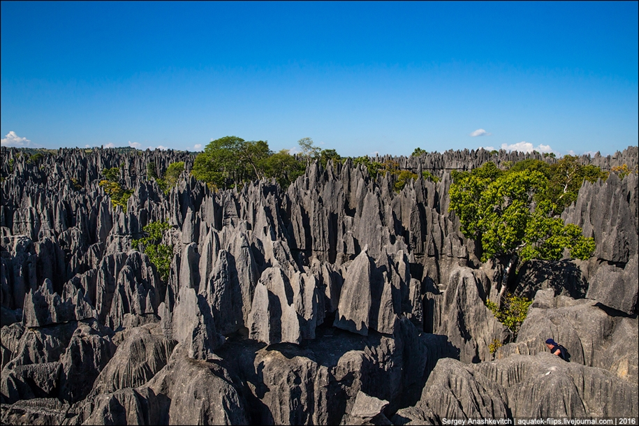 It's worth seeing with your own eyes! Stone forest of Tsingy 17