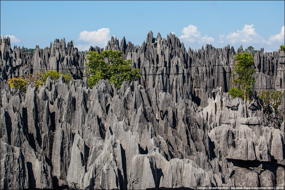 It's worth seeing with your own eyes! Stone forest of Tsingy 18