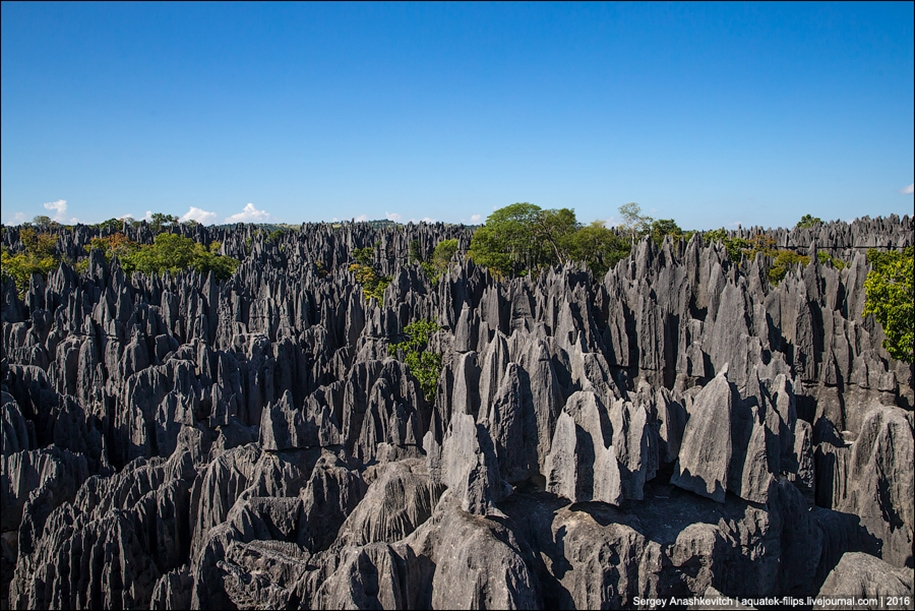 It's worth seeing with your own eyes! Stone forest of Tsingy 21