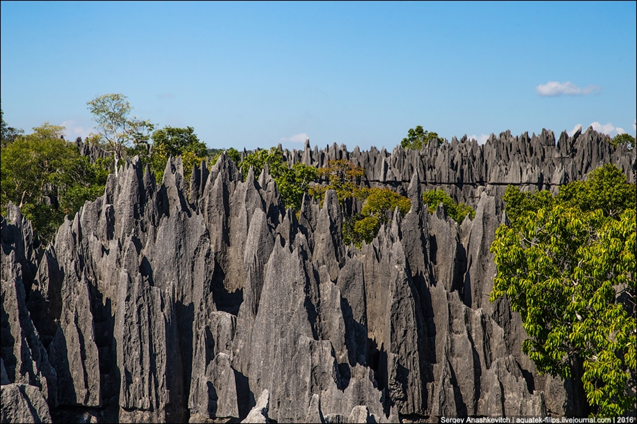 It's worth seeing with your own eyes! Stone forest of Tsingy 23