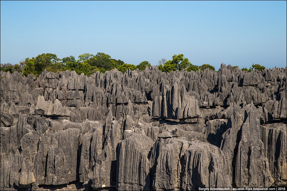 It's worth seeing with your own eyes! Stone forest of Tsingy 24