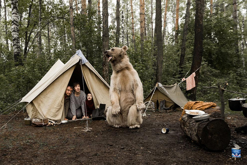 Like in a fairy tale. pictures of Russian family playing with a bear 01