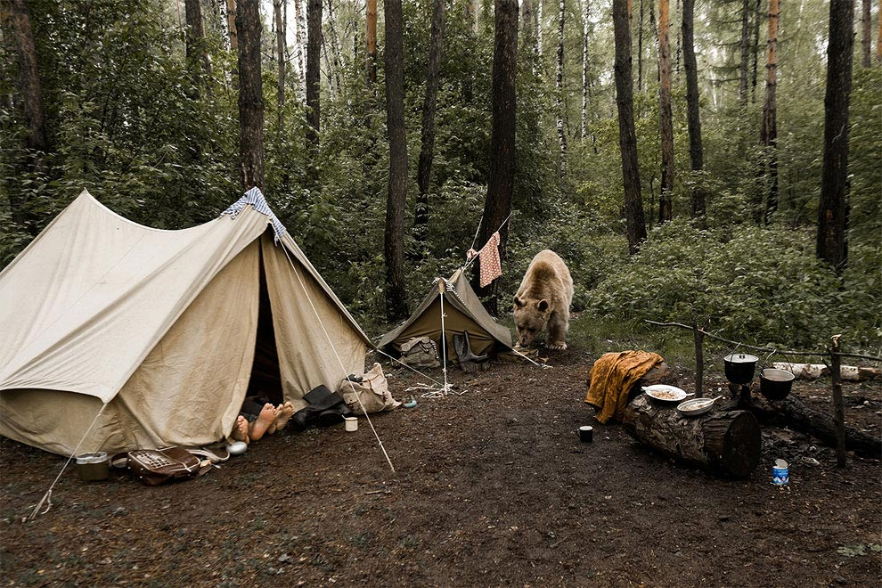 Like in a fairy tale. pictures of Russian family playing with a bear 02