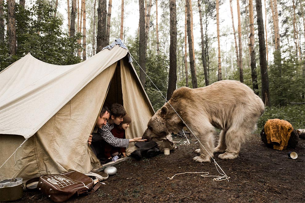 Like in a fairy tale. pictures of Russian family playing with a bear 03