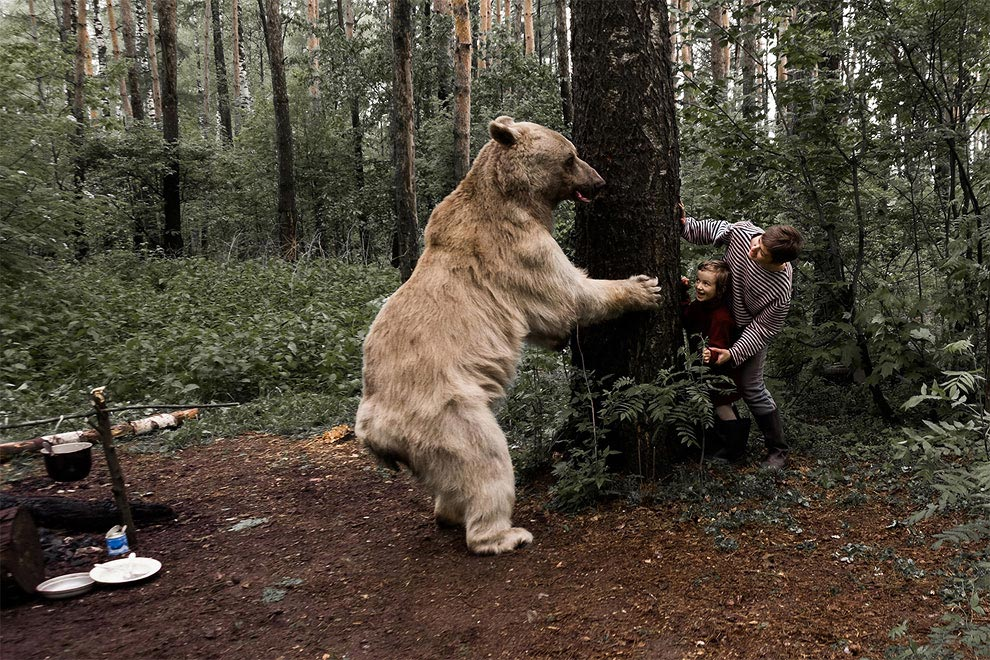 Like in a fairy tale. pictures of Russian family playing with a bear 09
