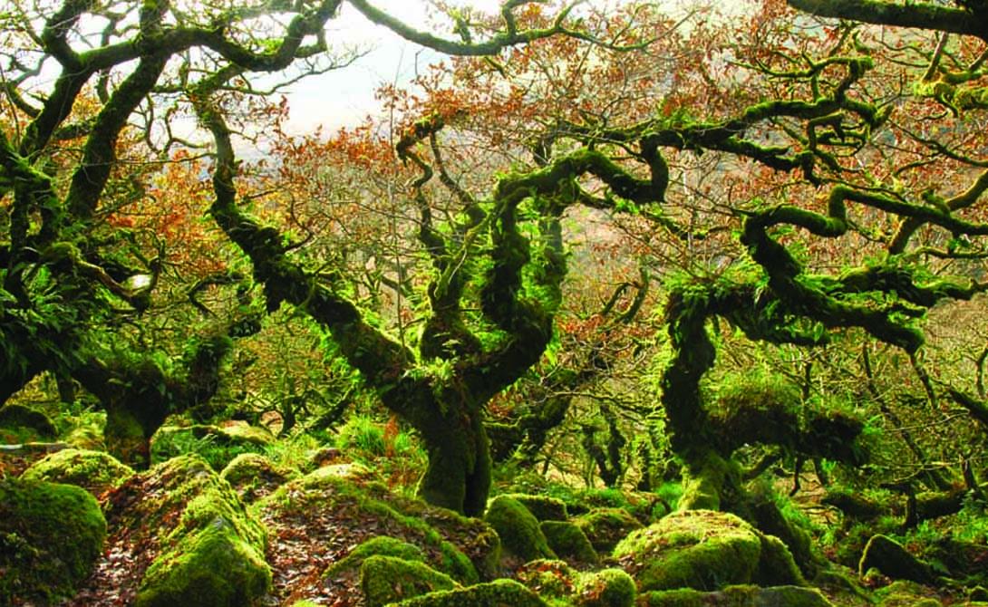 Mythical forest world 01