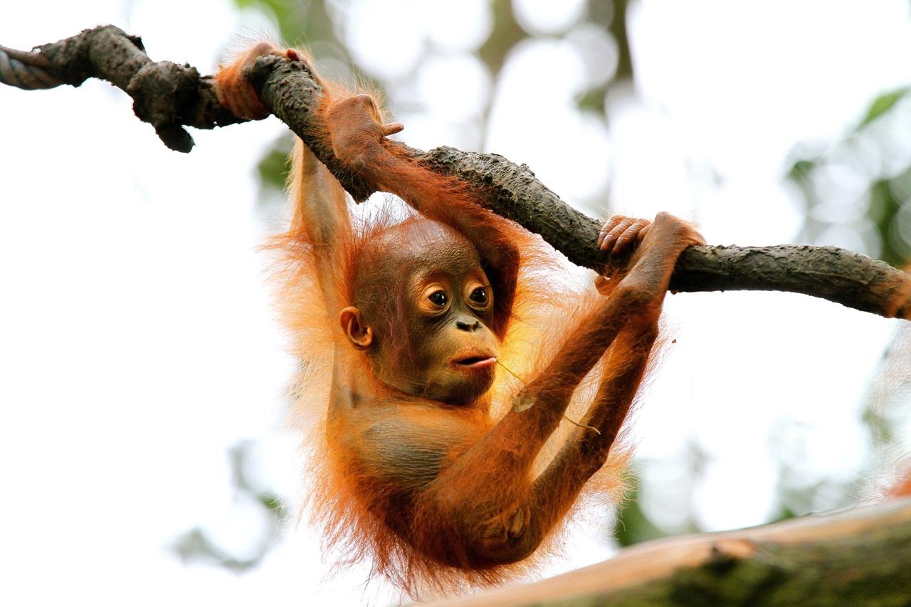 Снимки детёнышей животных в дикой природе