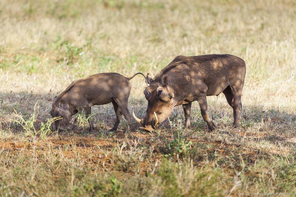 Samburu - see all 04