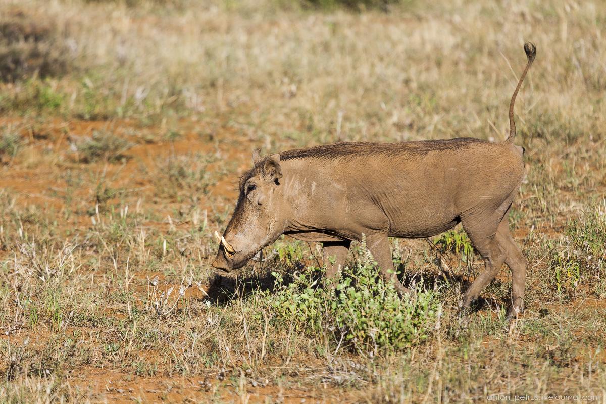 Samburu - see all 05