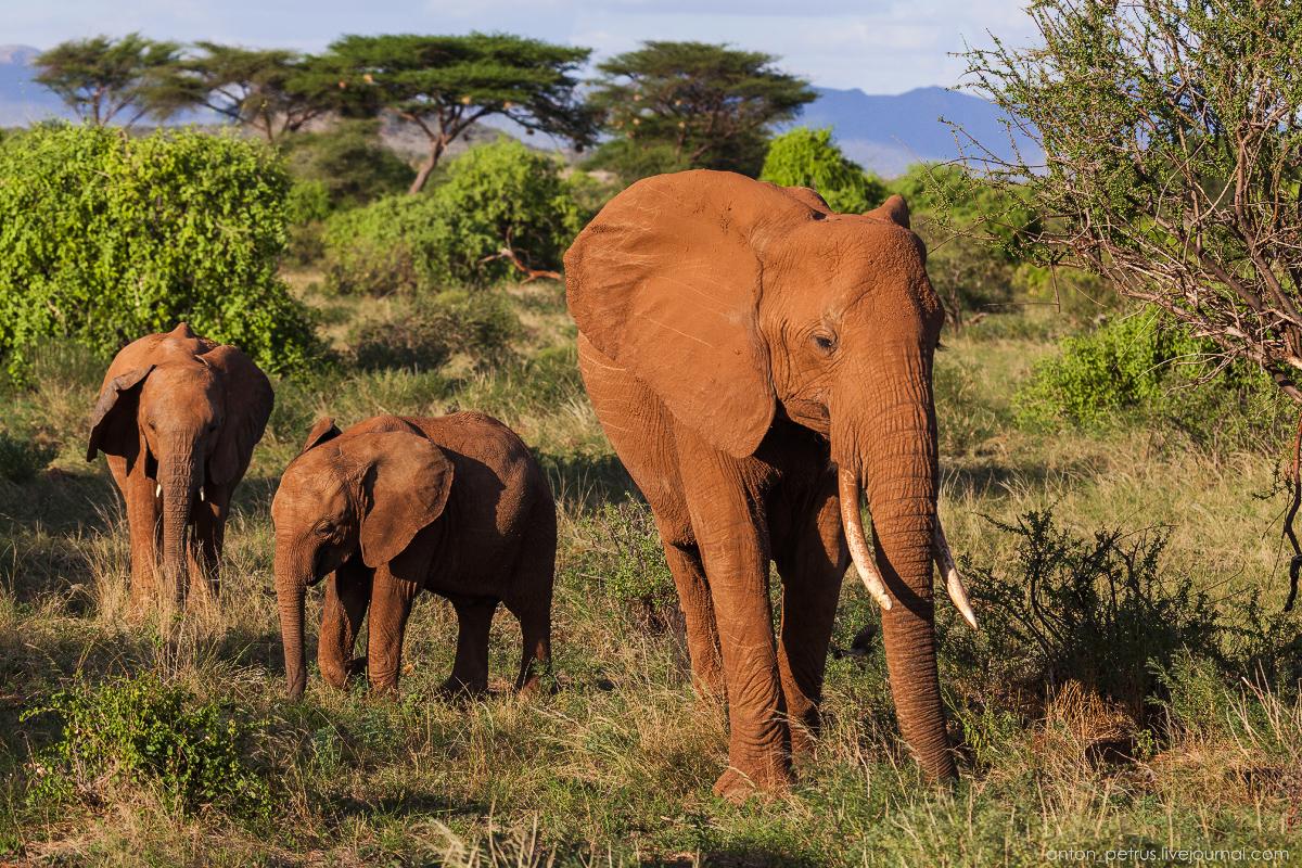 Samburu - see all 06