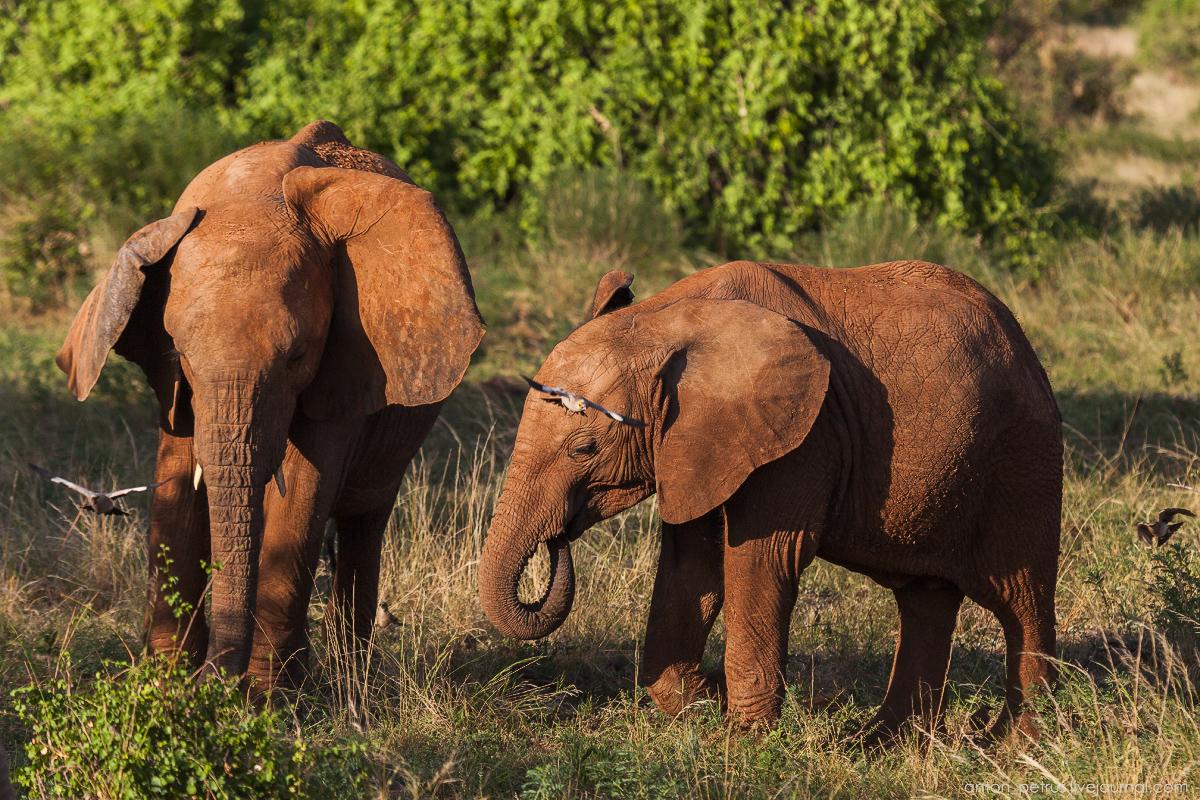 Samburu - see all 07