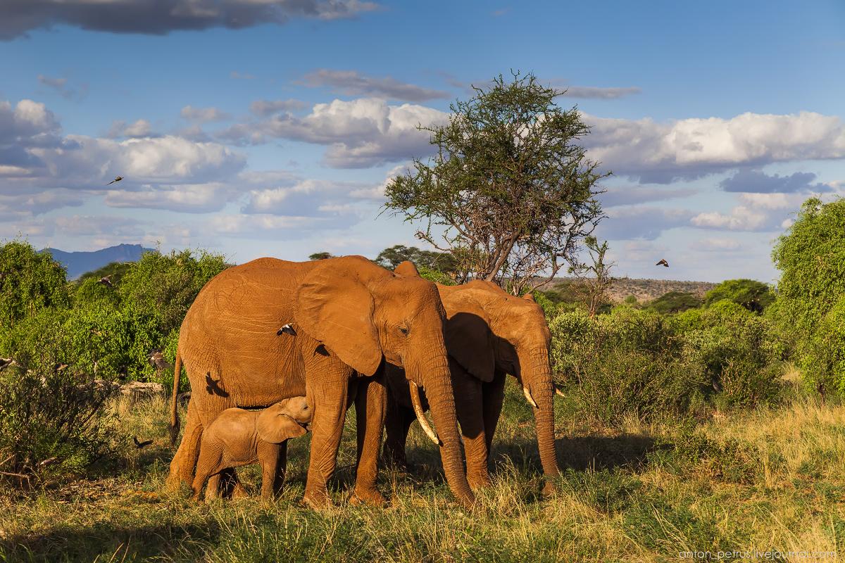 Samburu - see all 08