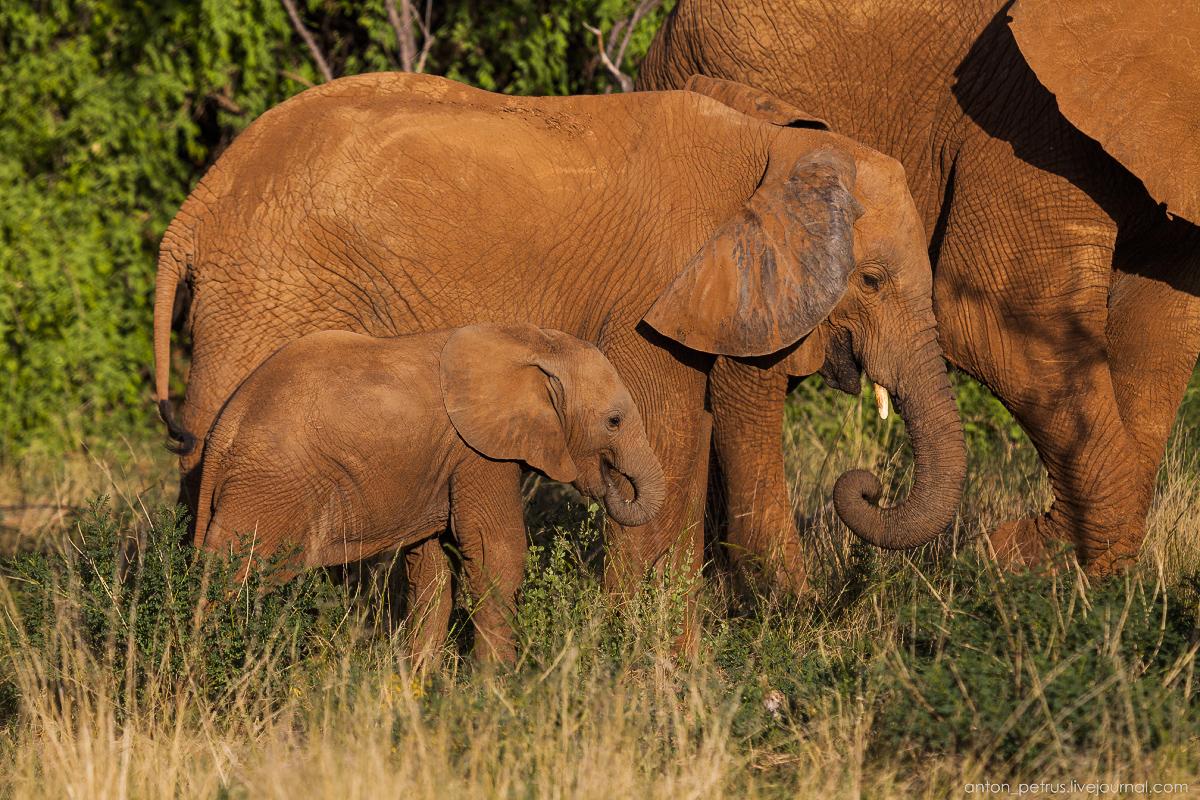 Samburu - see all 09