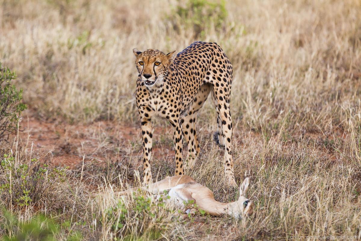 Samburu - see all 11