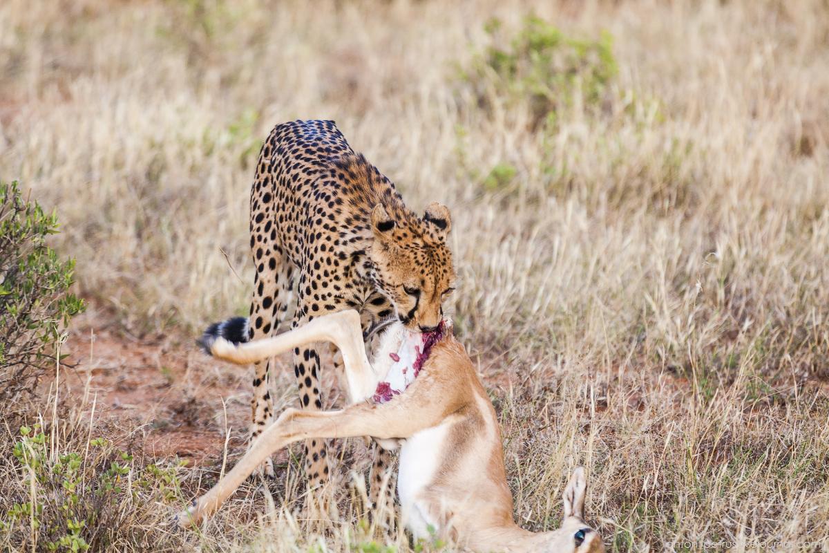 Samburu - see all 12