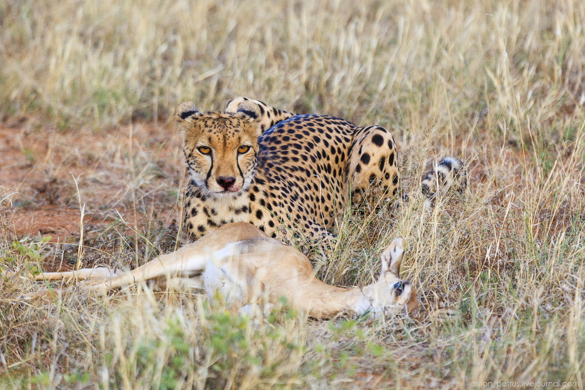 Samburu - see all 13