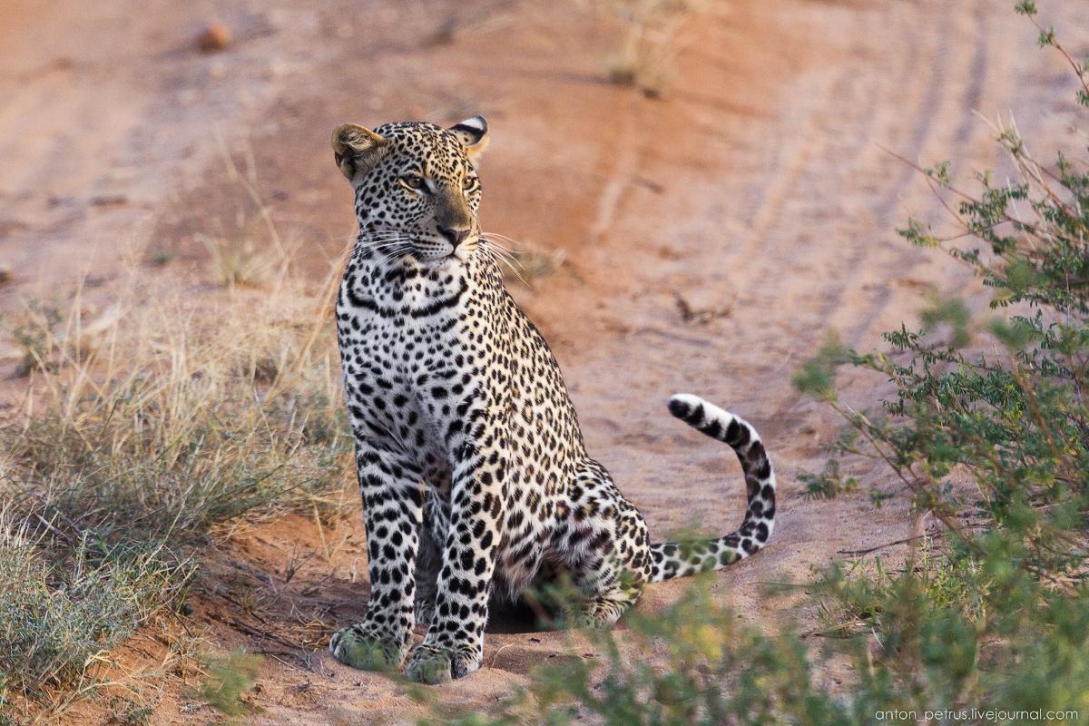 Samburu - see all 14