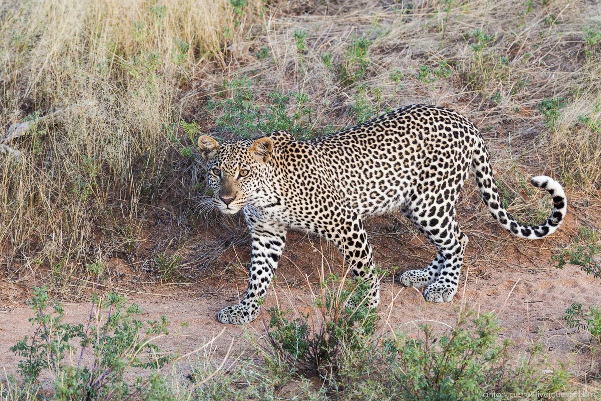 Samburu - see all 15