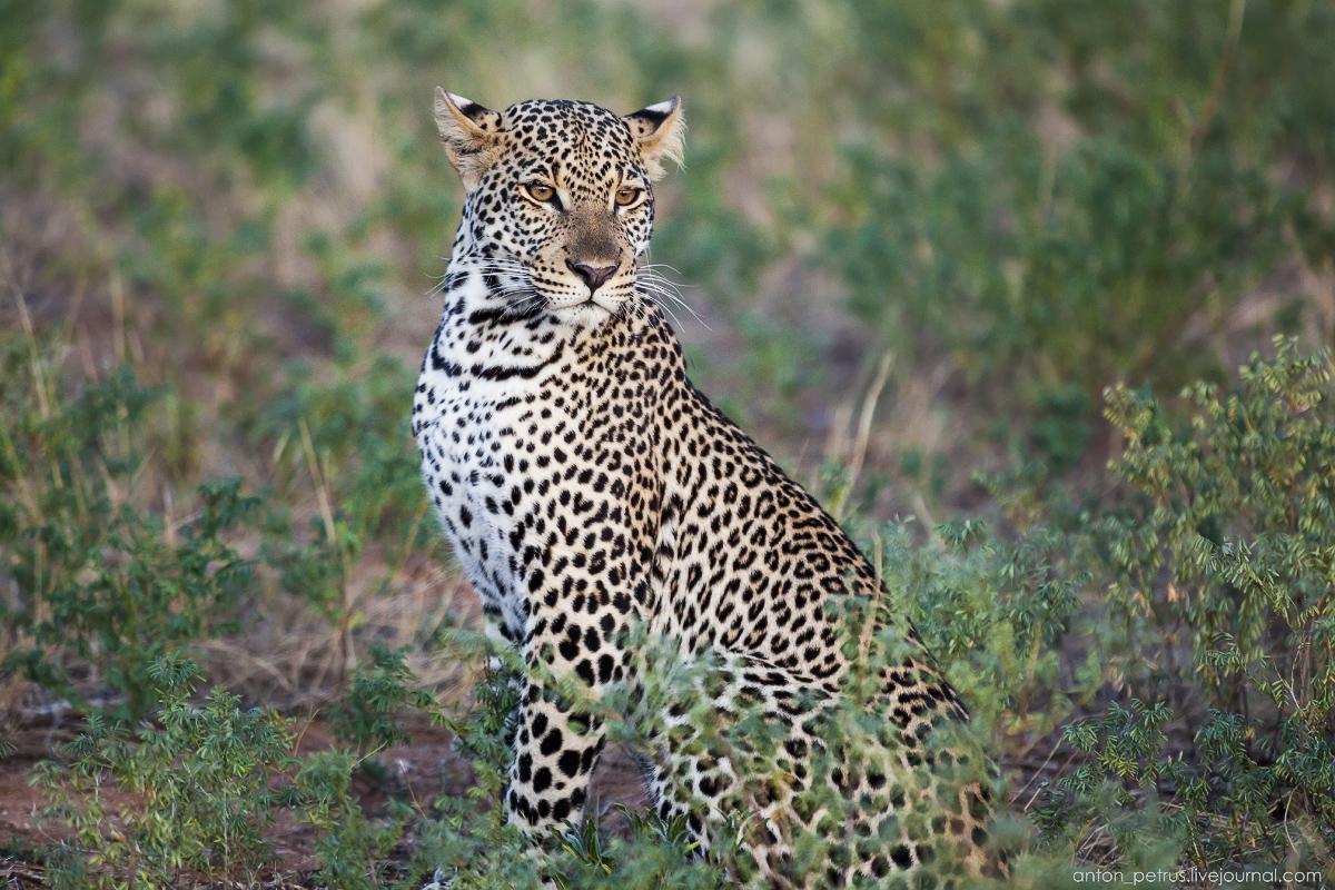 Samburu - see all 16