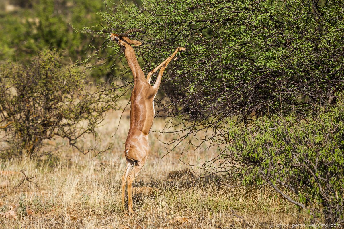 Samburu - see all 17