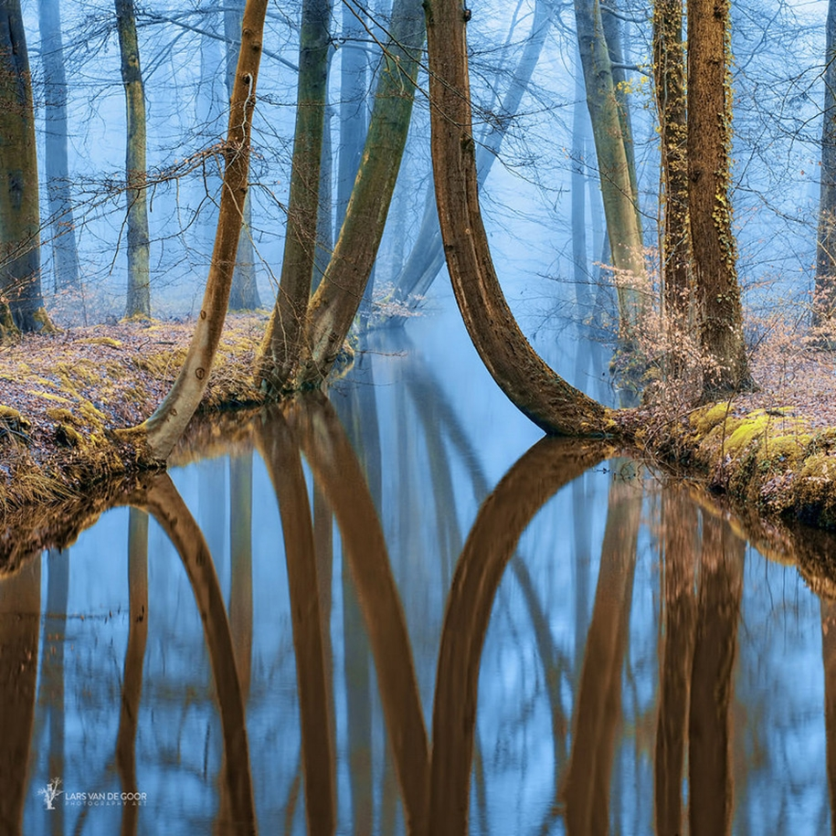 The beauty of the forest landscape from Dutchman Lars van de Gur 10