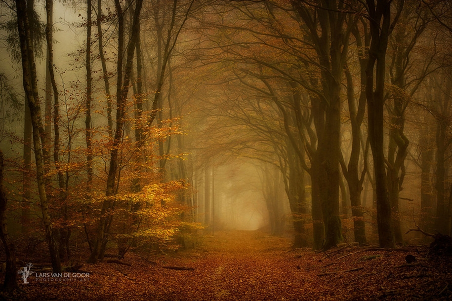 The beauty of the forest landscape from Dutchman Lars van de Gur 11