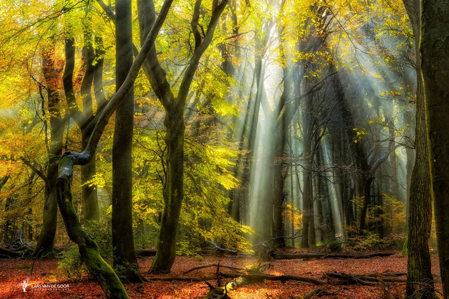 The beauty of the forest landscape from Dutchman Lars van de Gur 12